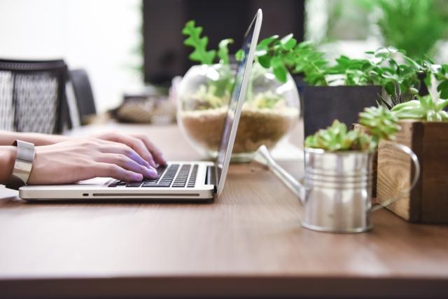 パソコンと観葉植物