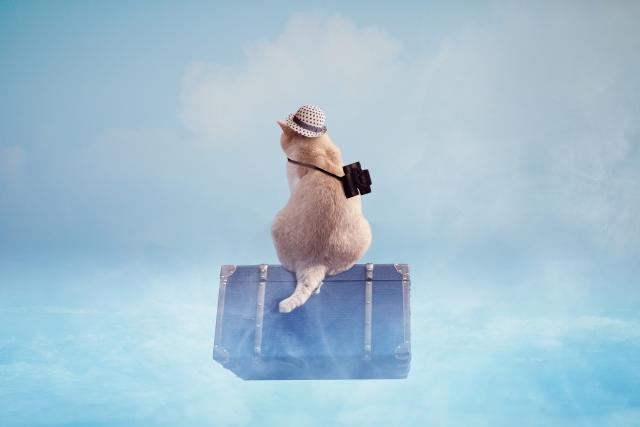 旅行する猫