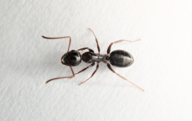 アリが4,000円!?どこにでもいる蟻を副業にして稼ぐ方法