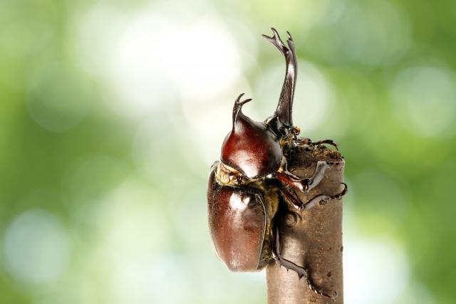 虫が副業になる!?昆虫養殖や昆虫ハンターで稼ぐ方法
