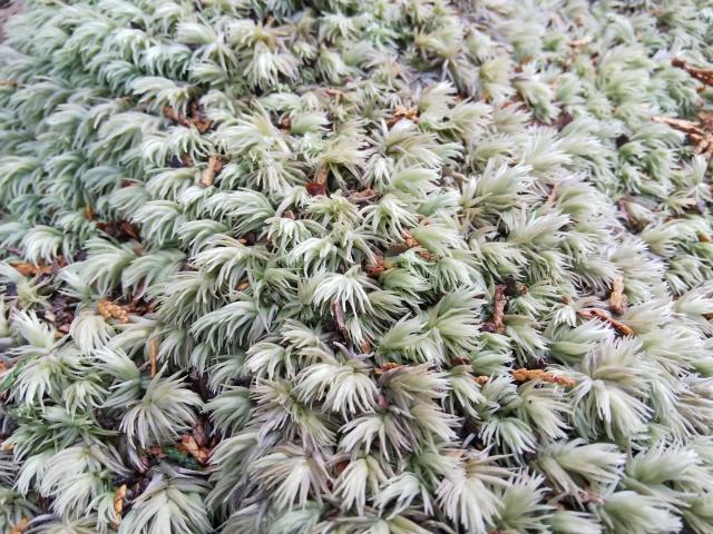 苔玉の作り方と販売して稼ぐ方法!おすすめの種類や必要な道具・材料