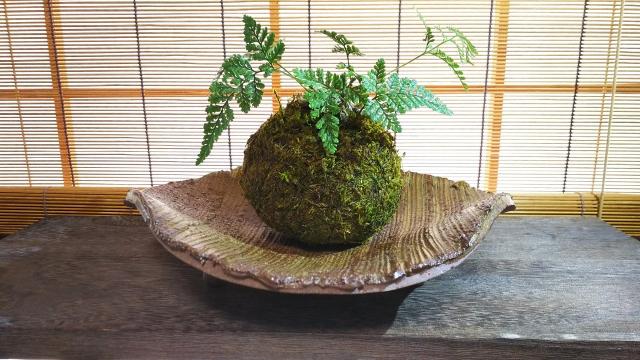 苔玉の作り方と販売して稼ぐ方法